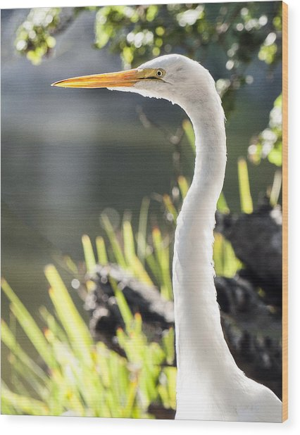 Great Egret Headshot Profile  Wood Print
