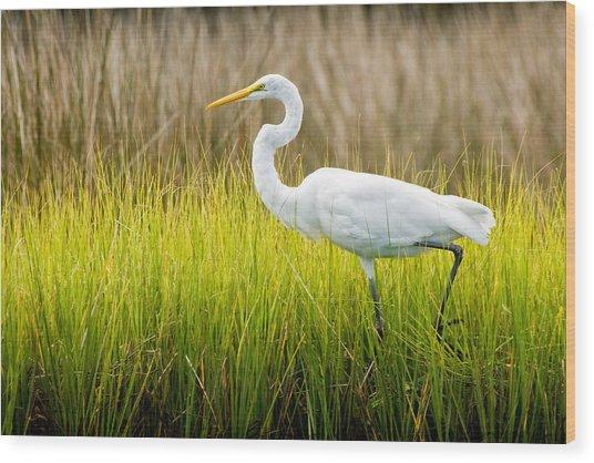 Great Egret In Cedar Point Marsh Wood Print