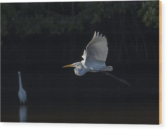Great Egret In Morning Flight Wood Print