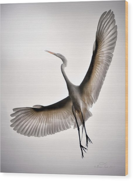 Great Egret Majesty Wood Print