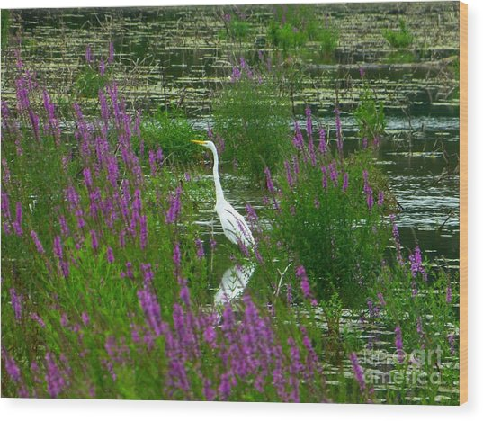Great Egret - Purple Wood Print