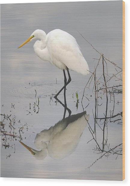 Great Egret Reflected Wood Print by Brian Grant