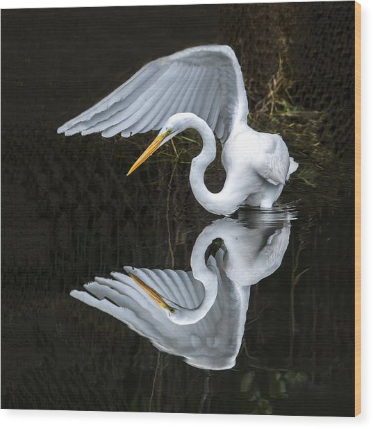 Great Egret Reflection Wood Print