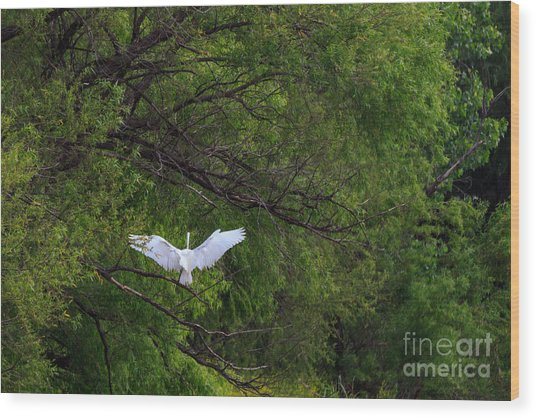 Great Egrets In The Shore Wood Print
