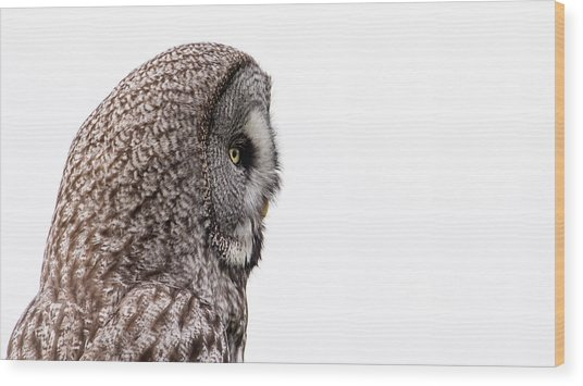 Great Grey's Profile On White Wood Print