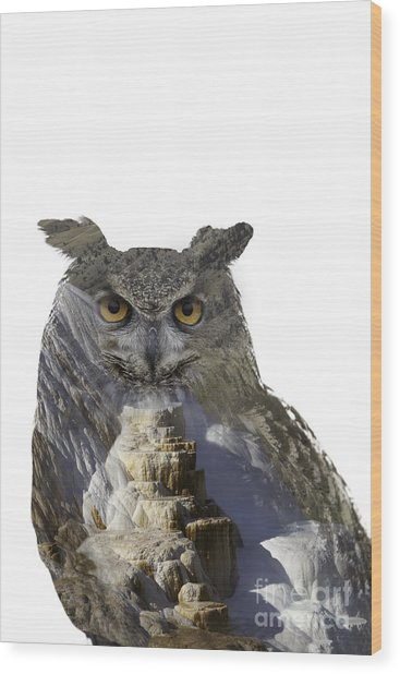 Great Horned Owl And Mammoth Hot Springs Wood Print