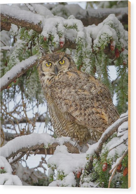 Great Horned Owl In Snow Wood Print