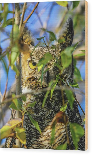 Great Horned Owl Peeking At It's Prey Wood Print