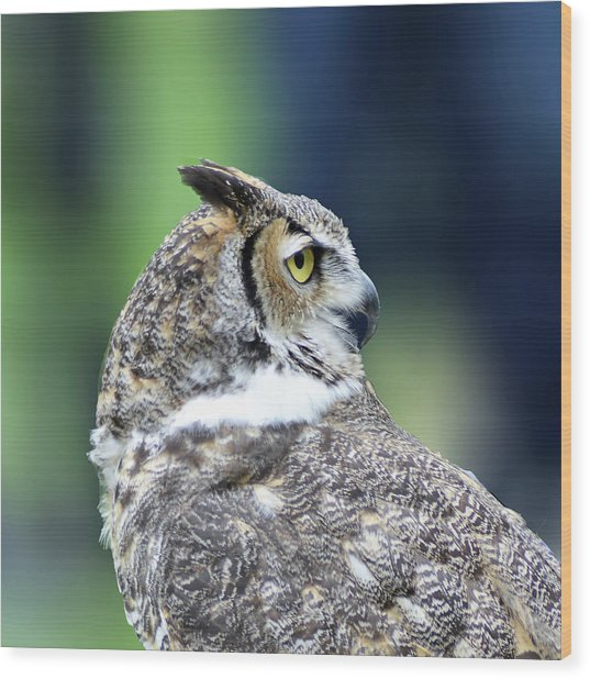 Great Horned Owl Profile Wood Print