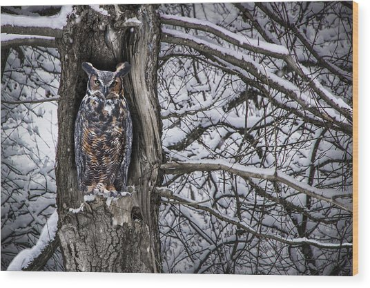 Great Horned Owl Sitting In A Tree During A Snowstorm Wood Print