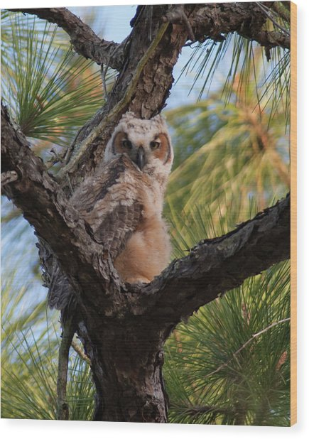 Great Horned Owlet Wood Print