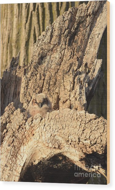 Great Horned Owlet Two Wood Print
