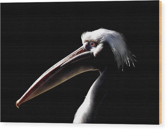 Great White Pelican Wood Print