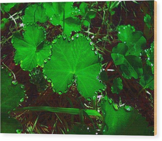 Green And Drops Wood Print
