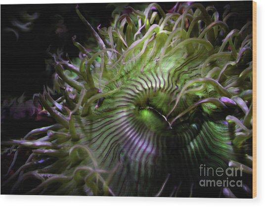 Green Anemone Wood Print
