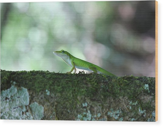 Green Anole Posing Wood Print