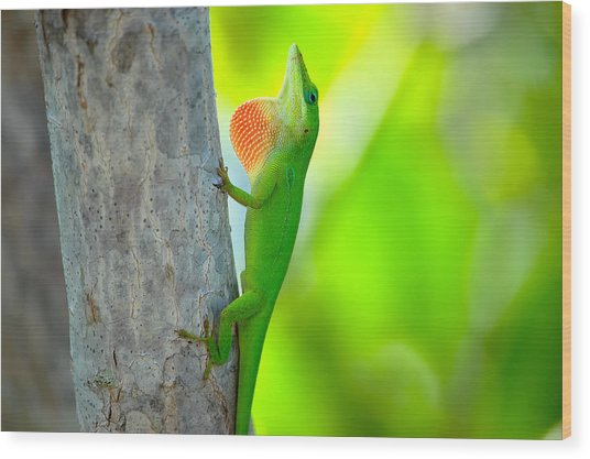 Green Anole Wood Print by Rich Leighton