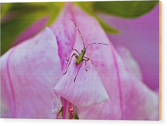 Green Bug On Rose Petal Wood Print by Michael Whitaker