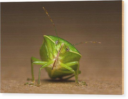 Green Bug Wood Print