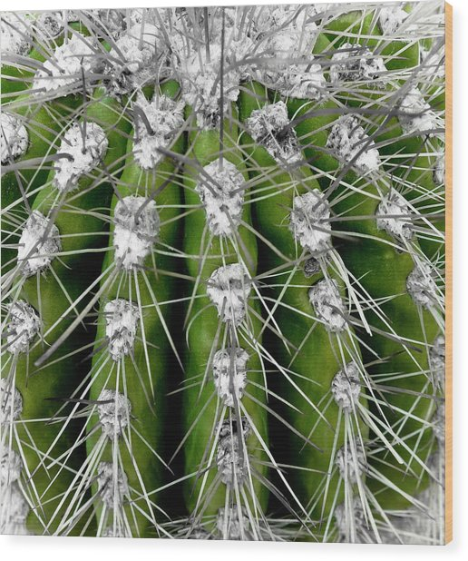 Green Cactus Wood Print by Frank Tschakert