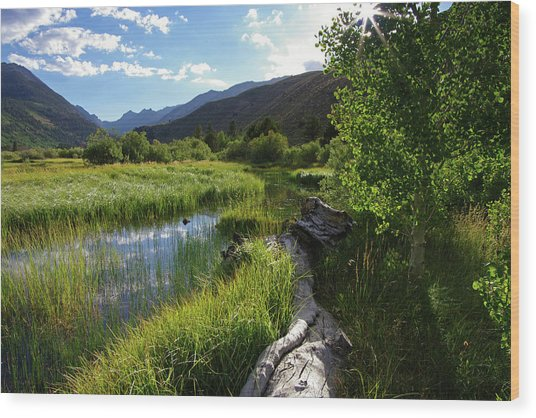 Green Creek Meadow Wood Print