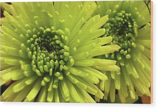 Green Delight Wood Print