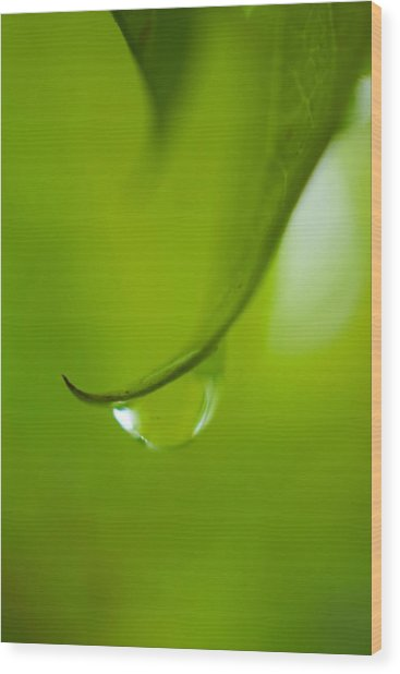 Green Drop Wood Print