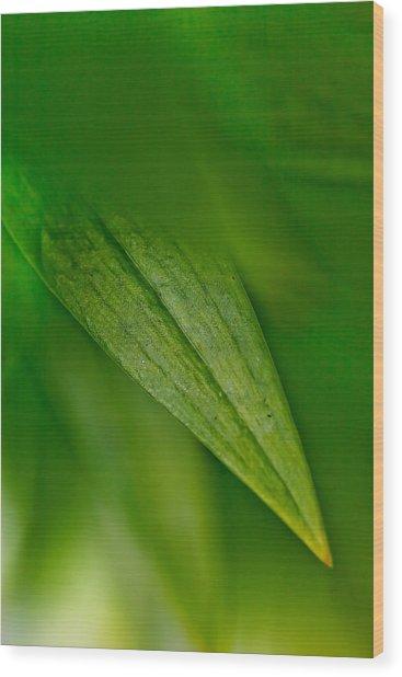 Green Edges Wood Print