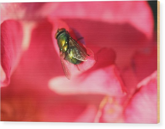 Green Fly Wood Print by Kerry Reed