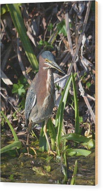 Green Heron Everglades Wood Print