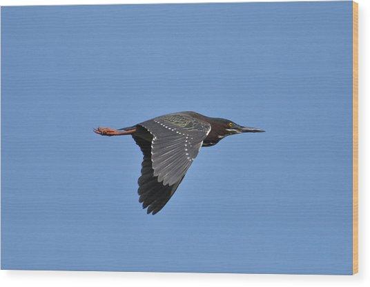 Green Heron In Flight Wood Print