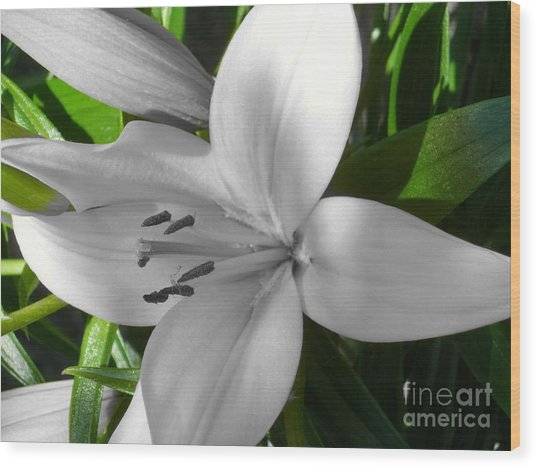 Green Highlighted Lily Wood Print
