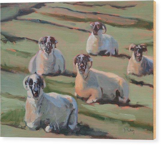 Green Hill Sheep At Rest Wood Print