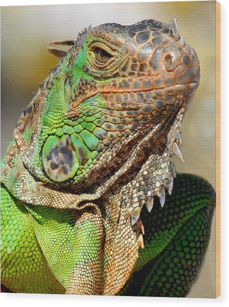 Green Iguana Series Wood Print
