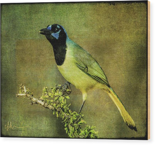 Green Jay With Textures Wood Print
