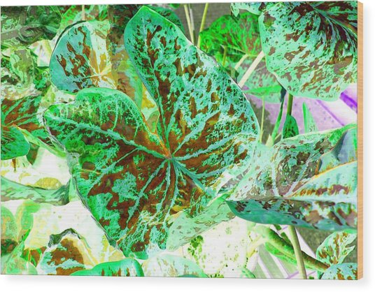Wood Print featuring the photograph Green Leafmania 1 by Marianne Dow