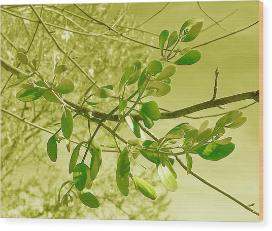 Green Leaves Wood Print by Russ Mullen