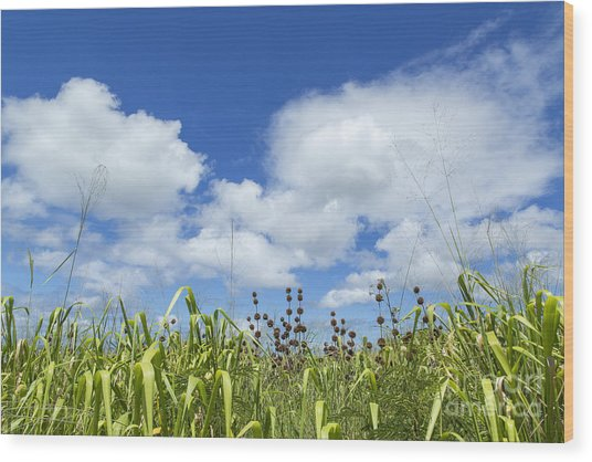 Green Meadow On Kauai Island, Hawaii Wood Print by Julia Hiebaum