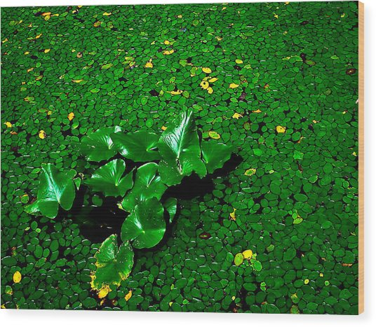 Green On Green Wood Print by Ron Plasencia