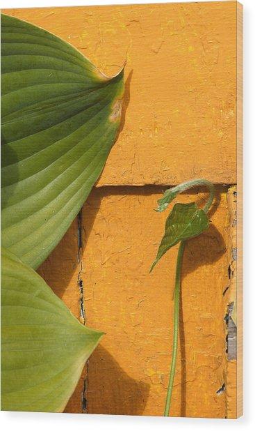 Green On Orange 4 Wood Print by Art Ferrier