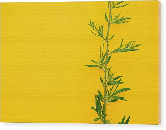 Green On Yellow 5 Wood Print by Art Ferrier