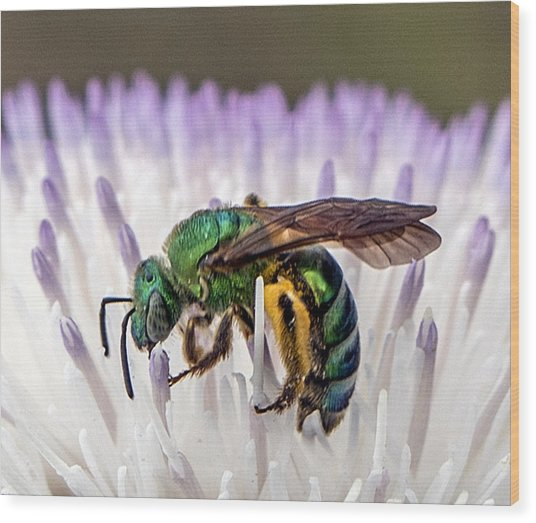 Green Orchid Bee Wood Print