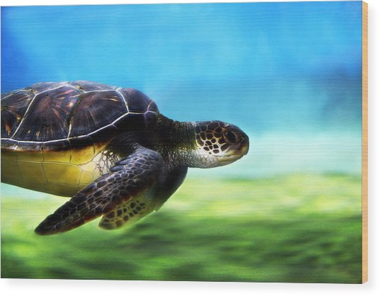 Green Sea Turtle 2 Wood Print
