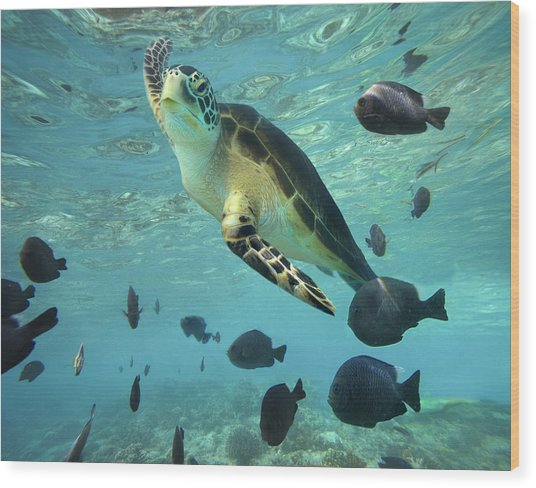 Wood Print featuring the photograph Green Sea Turtle Balicasag Island by Tim Fitzharris
