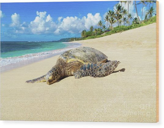 Green Sea Turtle Hawaii Wood Print