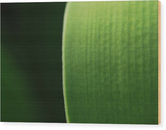 Green Wood Print by Susette Lacsina