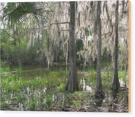 Green Swamp Wood Print