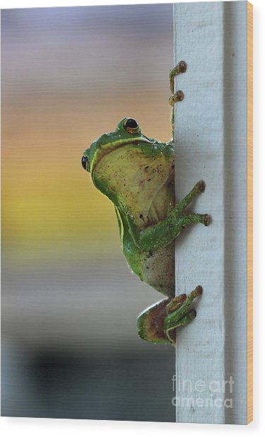 Green Tree Frog  It's Not Easy Being Green Wood Print