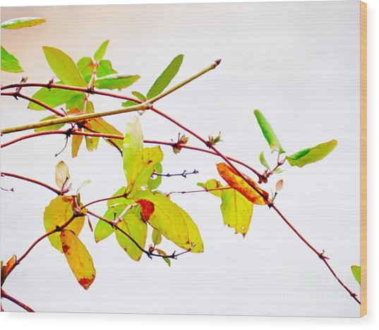 Green Twigs And Leaves Wood Print
