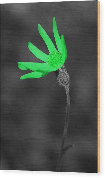 Green9 Wood Print